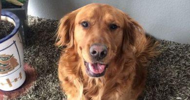 Você tem cachorro? Então, saiba que se seu cachorro latir poderá pagar multa de até R$ 23 mil