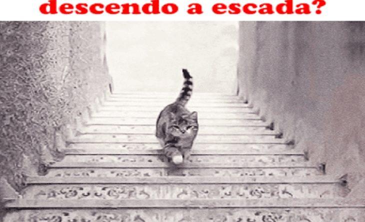 Teste: o gato está subindo ou descendo a escada? Sua resposta definirá traços de sua personalidade