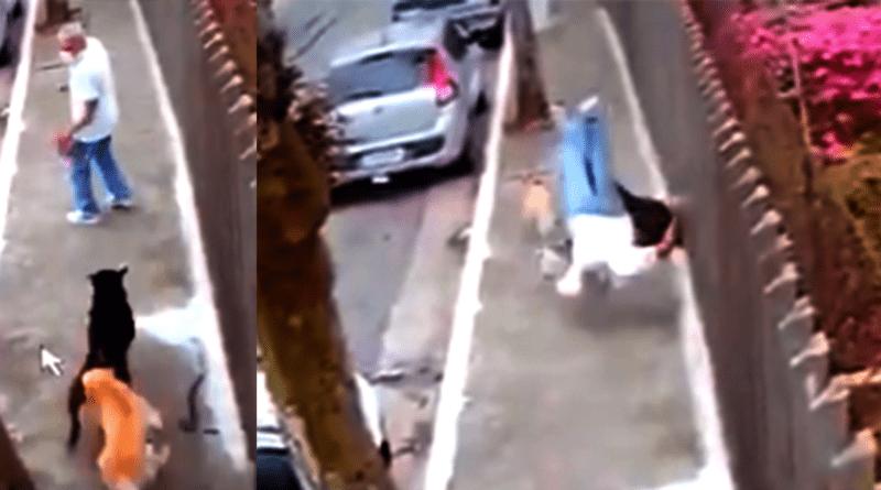 Um homem de 48 anos faleceu ao ser atropelado por cachorros.