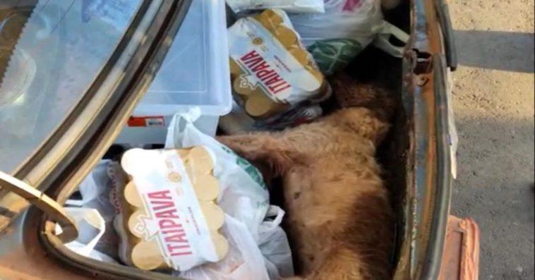 Cachorro morre dentro de porta-malas após ser esquecido pelo dono.