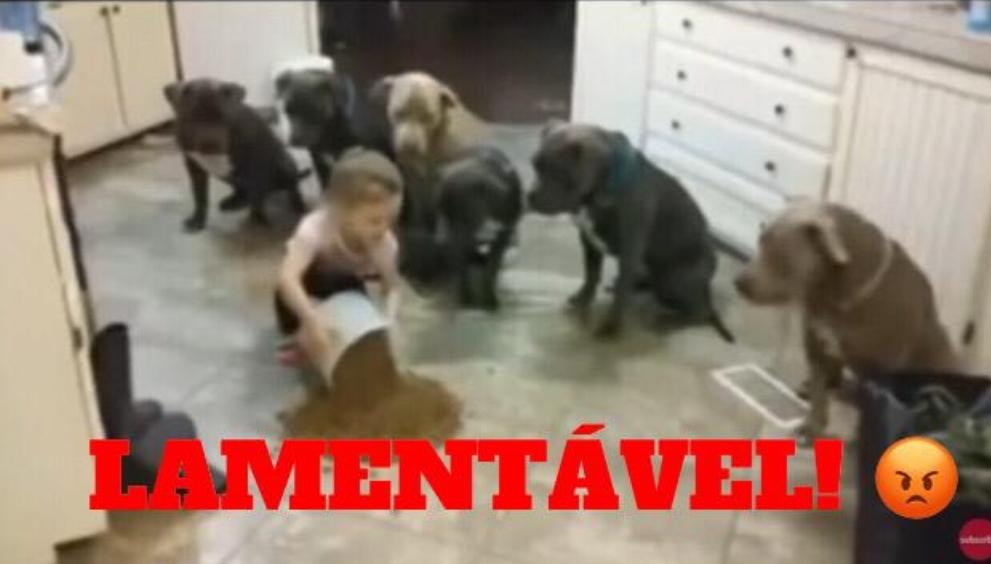 Mãe deixa filha de 4 anos sozinha com 6 Pitbulls e fica em choque ao ver as imagens da câmera; Veja o vídeo