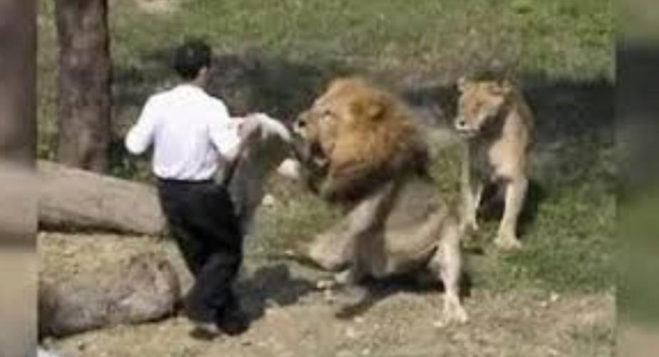 Pastor entra na jaula dos Leões dizendo que Jesus iria lhe salvar, Mas algo deu errado; Veja no vídeo: